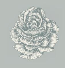 老式的玫瑰矢量插画