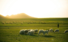 新疆牧场图片