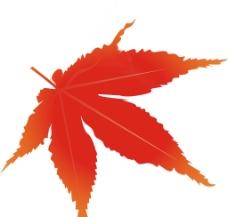 枫叶图片图片