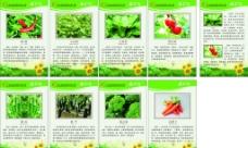 蔬菜王国图片