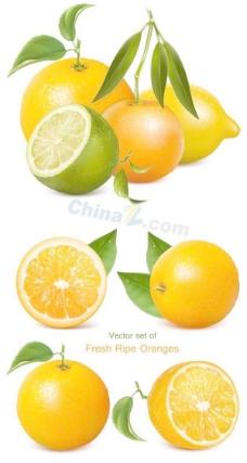 新鲜带叶橙子矢量图下载