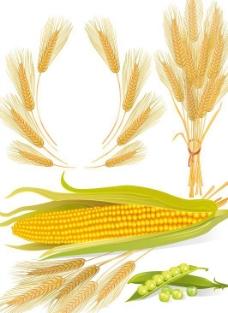 小麦玉米矢量图