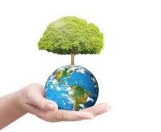 地球綠色大樹