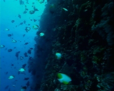 海洋生物素材下载