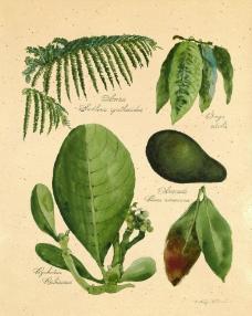 植物标本图片
