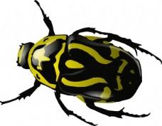 SRD的绿色甲虫剪贴画