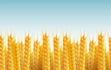 水稻小麥農作物圖片