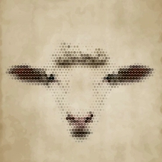 绵羊羊头图片