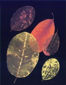 叶子 无框画图片