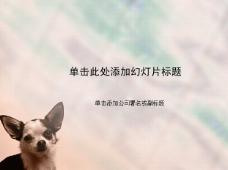 大耳朵宠物狗可爱PPT模板
