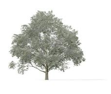 植物大树装饰素材室内装饰用品素材园林装饰素材 8