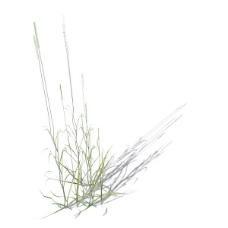 植物花草装饰素材室内装饰用品素材室内装饰素材 82