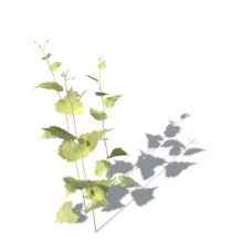植物花草装饰素材室内装饰用品素材花草模型 16