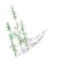 植物花草装饰素材室内装饰用品素材花草模型 93