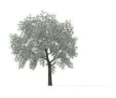 植物大树装饰素材室内装饰用品素材园林盆栽素材 6
