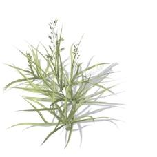 植物花草装饰素材室内装饰用品素材花草装饰素材 10