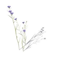 植物花草装饰素材室内装饰用品素材3d模型素材 49