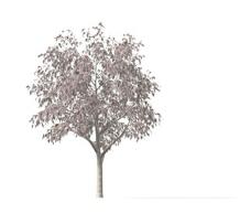 植物大树装饰素材室内装饰用品素材园林装饰素材 5