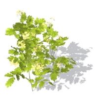 植物花草装饰素材室内装饰用品素材室内装饰素材 60