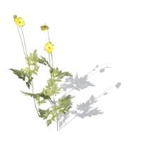 植物花草装饰素材室内装饰用品素材花草3d模型下载 11