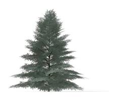 植物大树装饰素材室内装饰用品素材园林盆栽素材 3