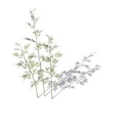 植物花草装饰素材室内装饰用品素材花草装饰素材 27