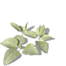 植物花草装饰素材室内装饰用品素材3d模型素材 9