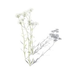 植物花草装饰素材室内装饰用品素材3d模型素材 1