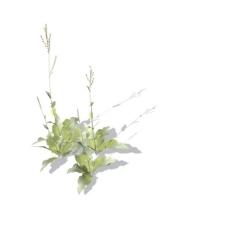 植物花草装饰素材室内装饰用品素材3d模型素材 12