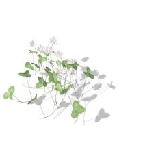 植物花草装饰素材室内装饰用品素材花草3d模型下载 14