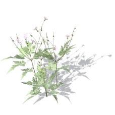 植物花草装饰素材室内装饰用品素材花草3d模型下载 2