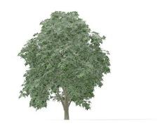 植物大树装饰素材室内装饰用品素材园林装饰素材 1