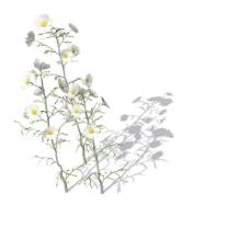 植物花草装饰素材室内装饰用品素材室内装饰素材 7