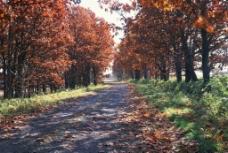 野外道路图片