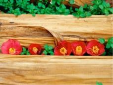 色彩鲜丽的红花绿叶毕业答辩PPT模板
